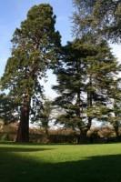 arbres couple