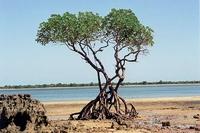 arbre racine