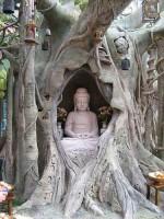 boudha arbre