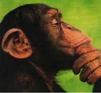 singe penseur